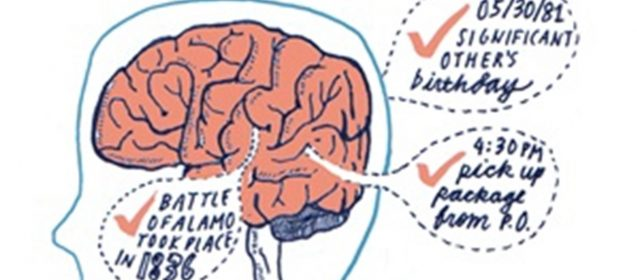 Ready To Become A Brainiac? Ways To Increase The Size Of Your Brain