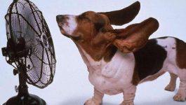 dog-fan-hot-cool-down1