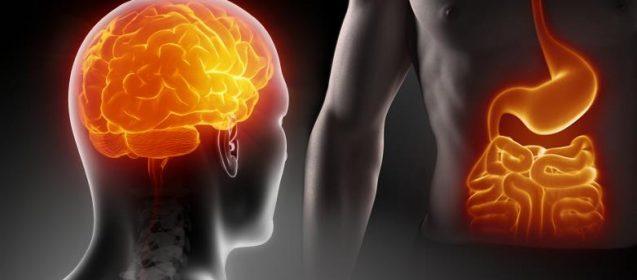 Gehirn Bauch Magen